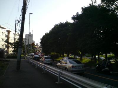 東海道の松並木.JPG