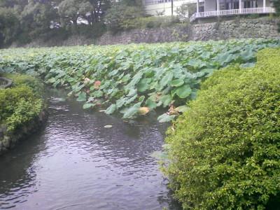 小田原城の堀.JPG